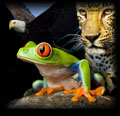 icon_wildlife