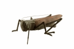 Garden Cricket Sculpture